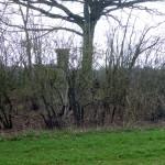 Hügelgrab mit Hochsitz