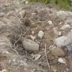 Grabungsschäden an Hügelgräbern Bild 4